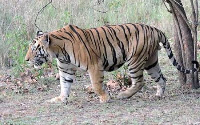 PM lays stress on balancing development and environment as tiger count nears 3,000