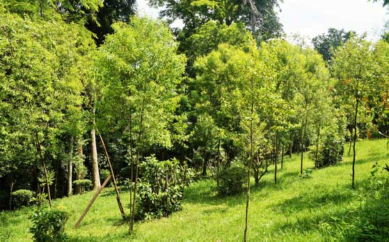 Mahindra's Plant a Tree campaign engages 4.5M